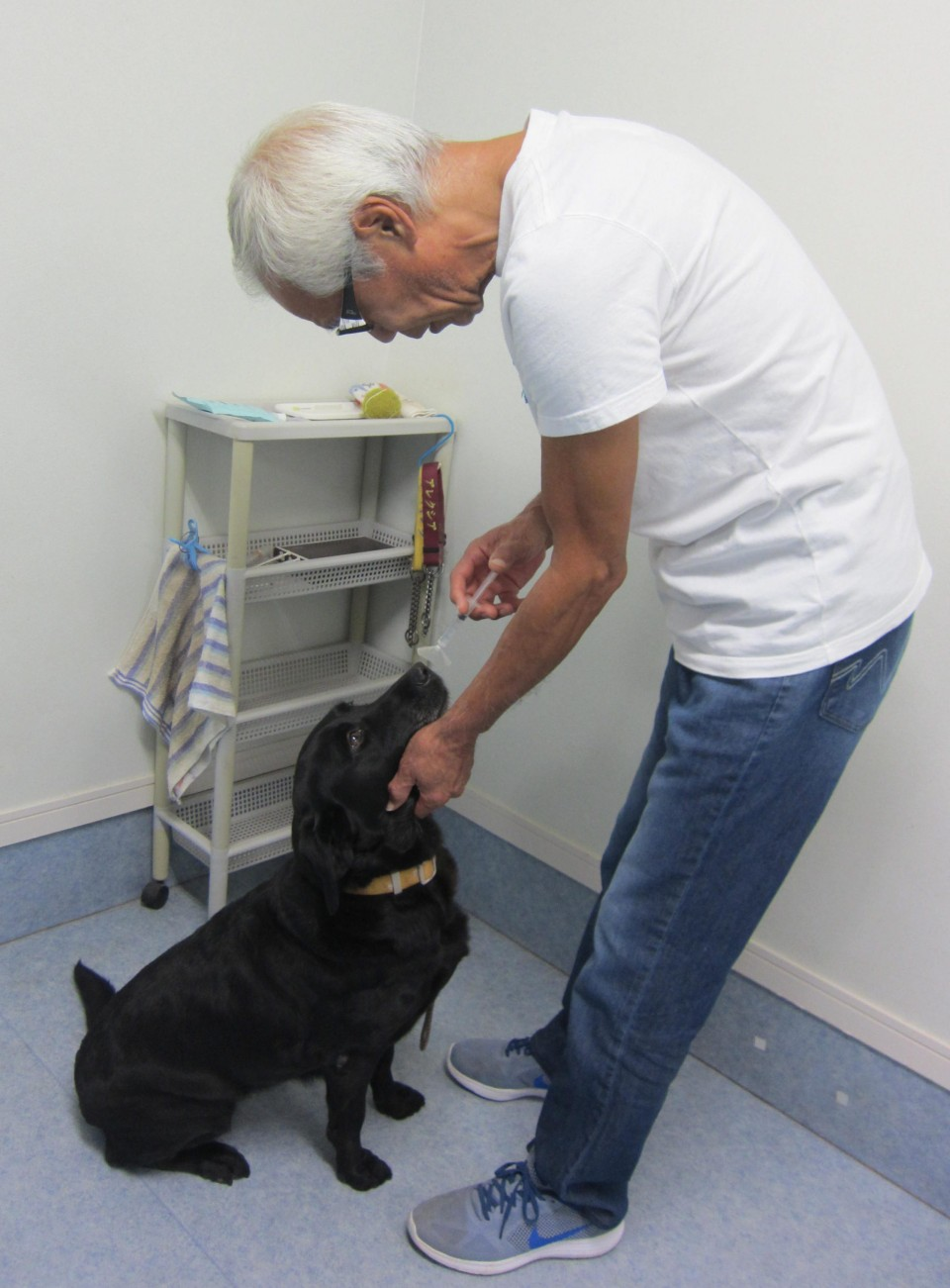 Sniffer dog cancer tests yield results but require trainers