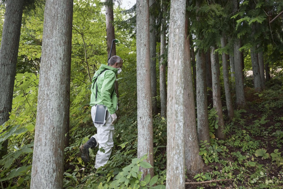 (PDF) A phytosociological survey of the deciduous temperate forests...