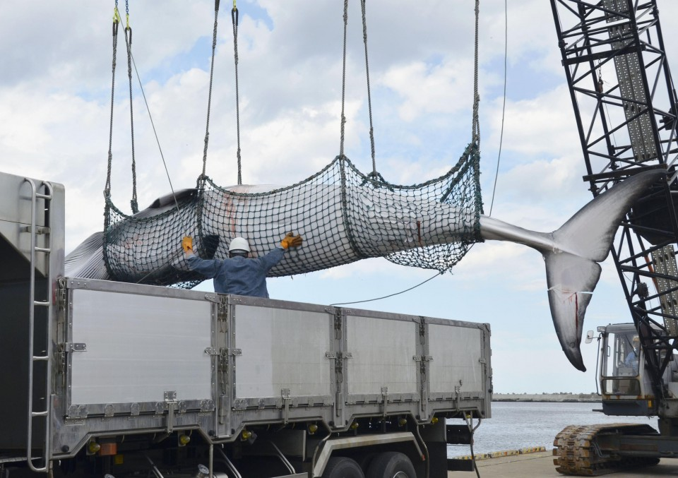 Whaling ships set sail as Japan resumes commercial hunts