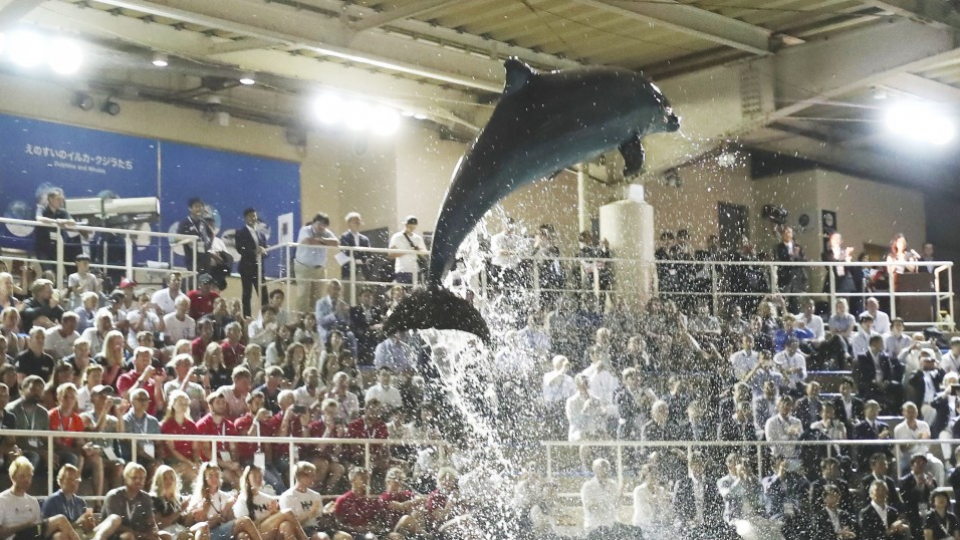 Sailors rap Japan for having dolphin show at World Cup opening