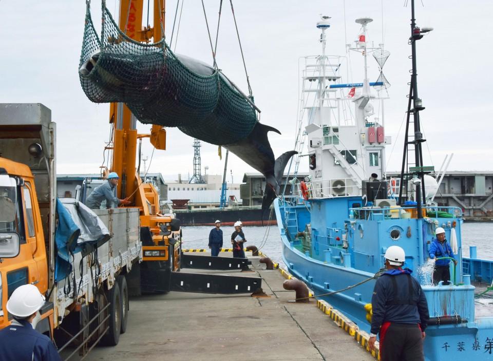 Japan to Restart Whaling Program in Antarctic despite ICJ