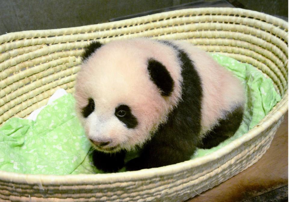 Giant panda cub born at Tokyo zoo named Xiang Xiang